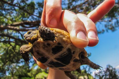 Ликийская тропа - черепаха