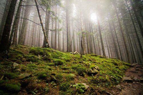 Поход в горы - Говерла и Петрос Карпаты