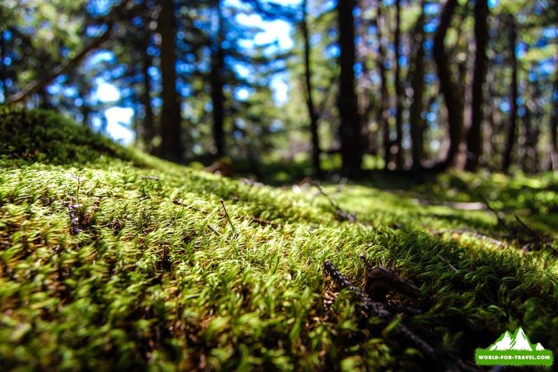 Поход в горы на Горган — Яйко Илемске — Молода