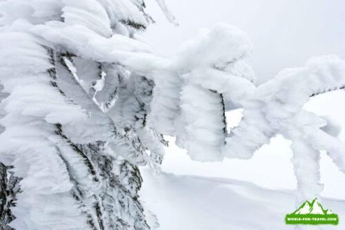 Поход на Черногорский массив зимой (Карпаты)