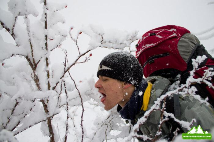 Зимние лакомства