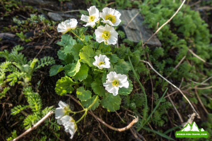 Балканы цветы