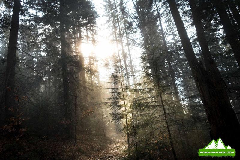 гора Яворник лес